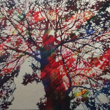 F50 88,7×115,7cm Prismatic Tree 2015